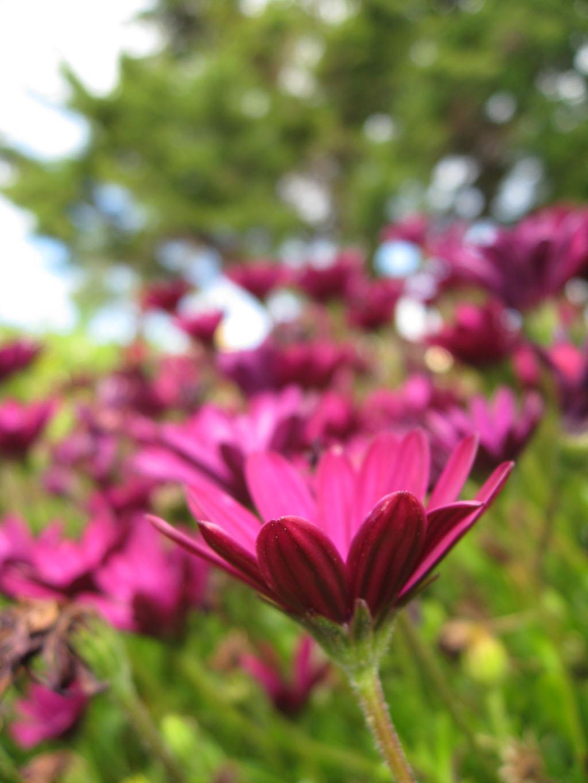 flower in mallorca